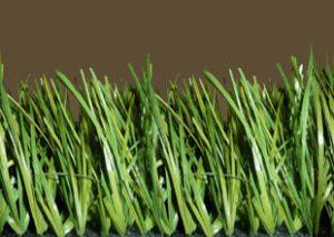 Stem Grass